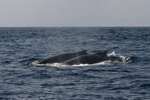 Image of Humpback Whales