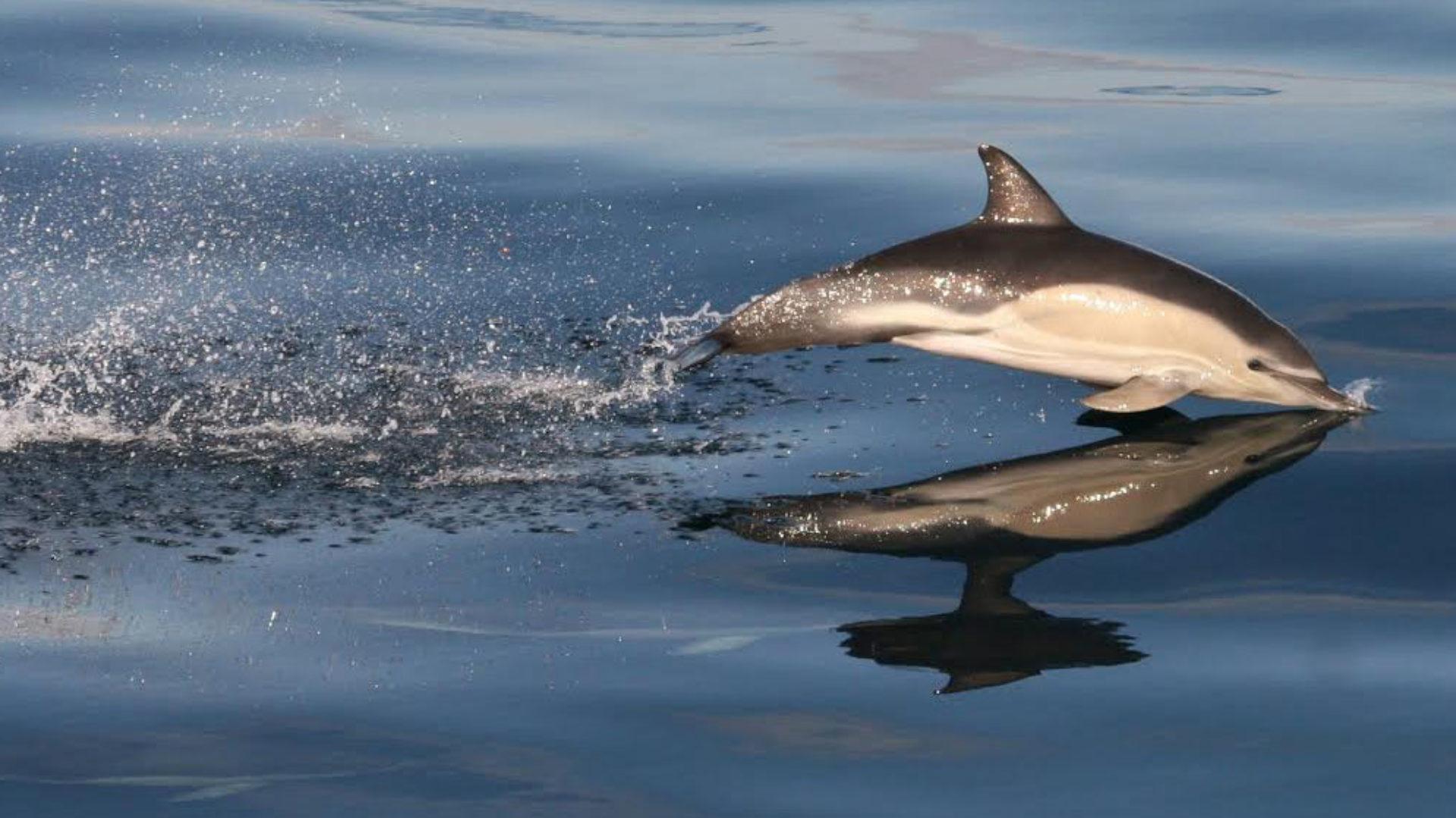 Shearwater Wildlife Tours