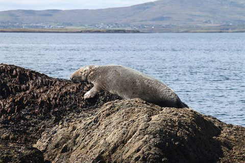 Image of Grey Seal