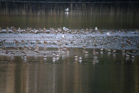 Image of Waders